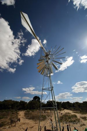 2009-07 (Zim- Wind Mill)_0083EDIT.jpg