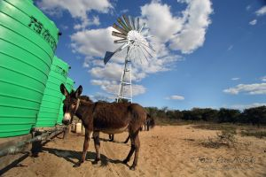 2009-07 (Zim- Wind Mill)_0091EDIT.jpg