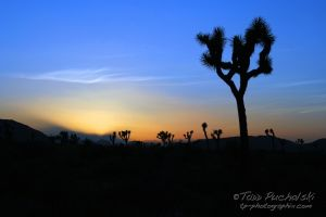2011-04 J-Tree Spring SunsetEDIT.jpg